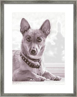 High Key Barney Framed Print by Linsey Williams