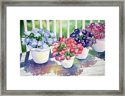 High Noon Petunias Framed Print by Deborah Ronglien