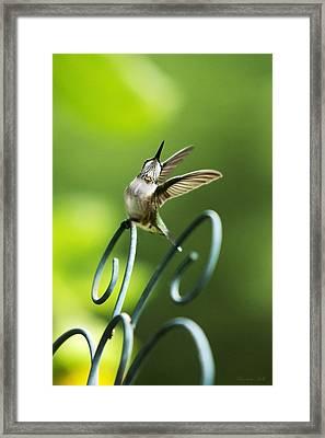 High Spirit Hummingbird Framed Print by Christina Rollo
