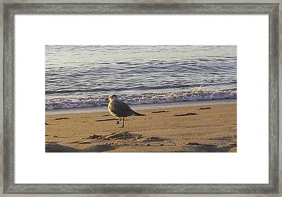 High Stepping In The Sand Framed Print by Debra Bowers