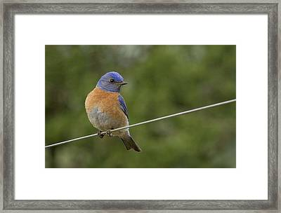 High Wire Framed Print by Jean Noren