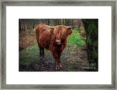 Highland Beast  Framed Print by Adrian Evans