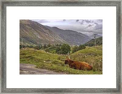 Highland Cow In Scotland Framed Print by Jason Politte