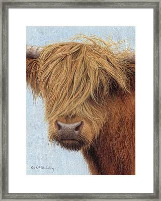 Highland Cow Painting Framed Print by Rachel Stribbling