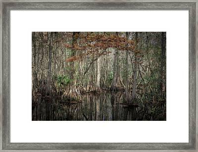Highland Hammocks State Park Florida    Framed Print by Rich Franco