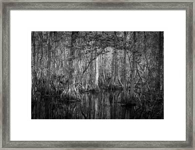 Highland Hammocks State Park Florida Bw Framed Print by Rich Franco