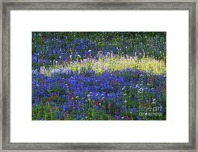 Highlight Of Wild Flowers Framed Print by Mark Kiver