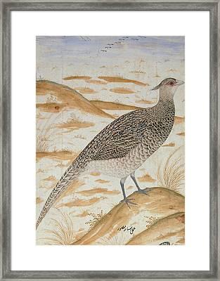 Himalayan Cheer Pheasant, Jahangir Period, Mughal, C.1620 Watercolour Framed Print by Mansur