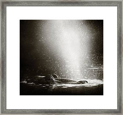 Hippo Blowing  Air Framed Print by Johan Swanepoel