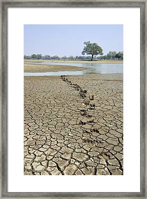 Hippo Footprints Framed Print by Science Photo Library