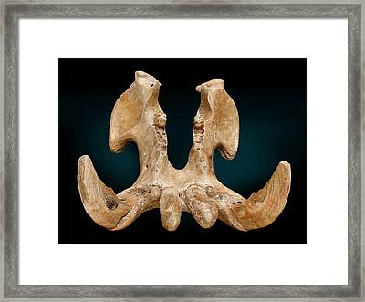 Hippopotamus Jaw Framed Print by Natural History Museum, London