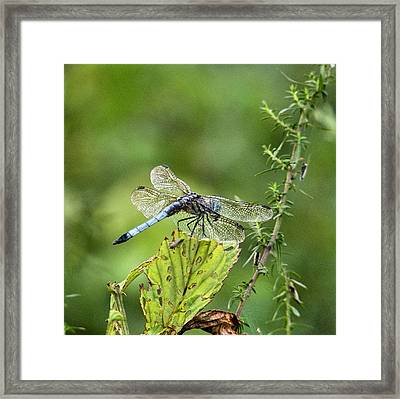 His Domain Framed Print by JC Findley