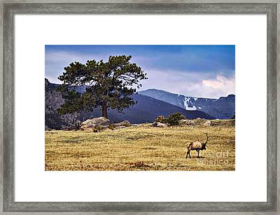 His Last Winter Framed Print by Catherine Fenner