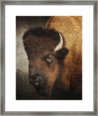His Majesty Framed Print by Ron  McGinnis