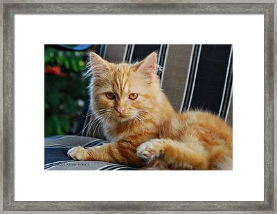 His Royal Highness Framed Print by Kenny Francis