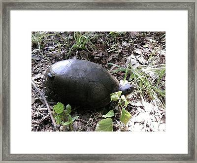 Hitching A Ride Framed Print by Tina Nies