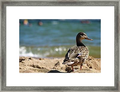 Hitting The Surf Framed Print by Lisa Knechtel