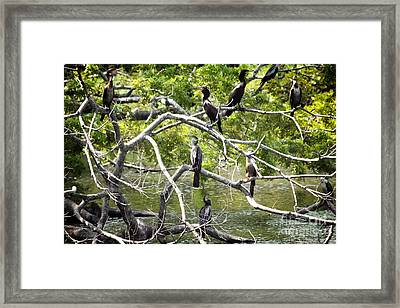 Hoa Meeting Framed Print by Bob Hislop