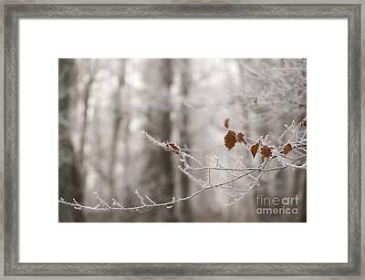 Hoar Frost Framed Print by Anne Gilbert