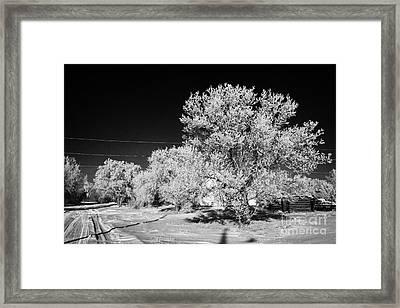 hoar frost on trees in small rural farming community during winter Forget Saskatchewan Canada Framed Print by Joe Fox