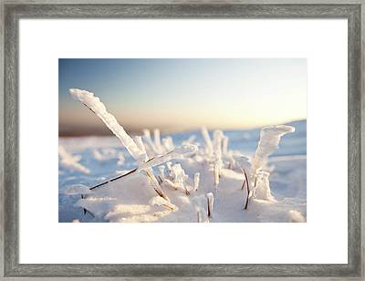 Hoare Frost On Grass Framed Print by Ashley Cooper