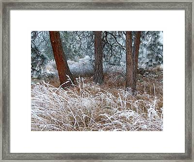 Hoarfrost 22 Framed Print by Will Borden