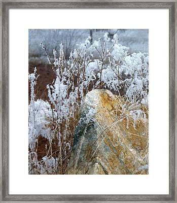 Hoarfrost 23 Framed Print by Will Borden