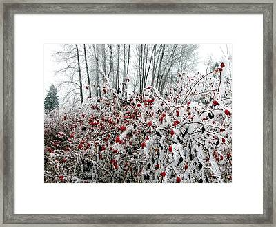 Hoarfrost 25 Framed Print by Will Borden