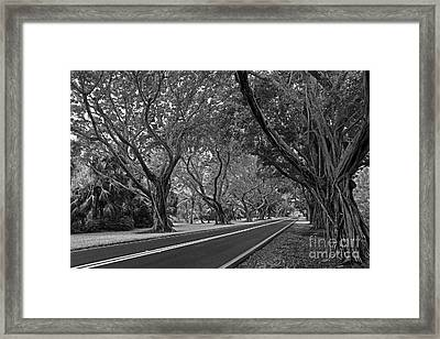 Hobe Sound Bridge Rd. West II Framed Print by Larry Nieland