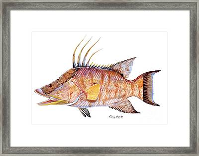 Hog Fish Framed Print by Carey Chen