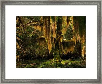 Hoh Rain Forest Framed Print by Leland D Howard