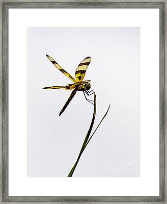 Holding On Framed Print by Anne Rodkin