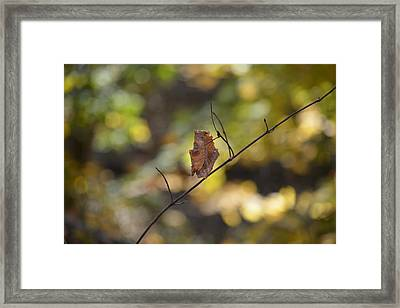 Holding On Framed Print by Nicholas Outar
