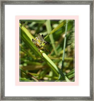 Holding On Framed Print by Sara  Raber