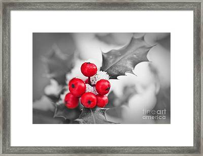 Holly Framed Print by Delphimages Photo Creations