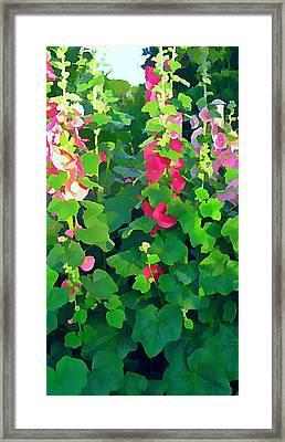 Hollyhocks By The Sea Framed Print by Anne Sterling