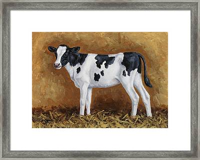 Holstein Calf Framed Print by Crista Forest