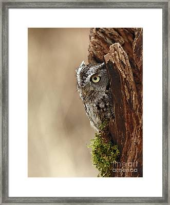 Home Sweet Home - Eastern Screech Owl In A Hollow Tree Framed Print by Inspired Nature Photography Fine Art Photography