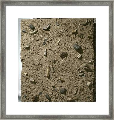 Homo Habilis Fossil Bed Framed Print by Science Photo Library