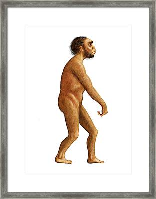 Homo Naledi Framed Print by David Gifford