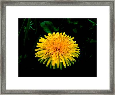 Honesty Framed Print by Lucy D