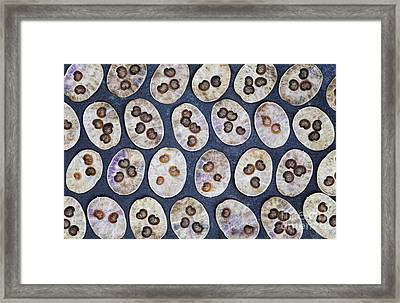 Honesty Seeds Pattern Framed Print by Tim Gainey