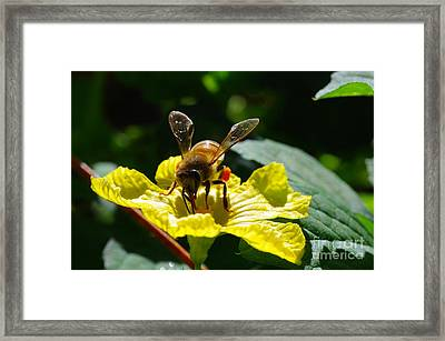 Honeybee 2 Framed Print by Don Youngclaus
