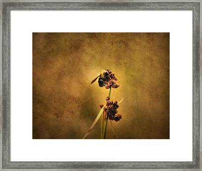 Honeybee Framed Print by Dan Sproul