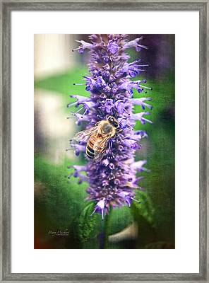 Honeybee On Hyssop Framed Print by Mary Machare
