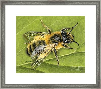 Honeybee On Leaf Framed Print by Sarah Batalka