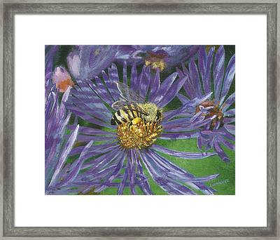 Honeybee On Purple Aster Framed Print by Lucinda V VanVleck
