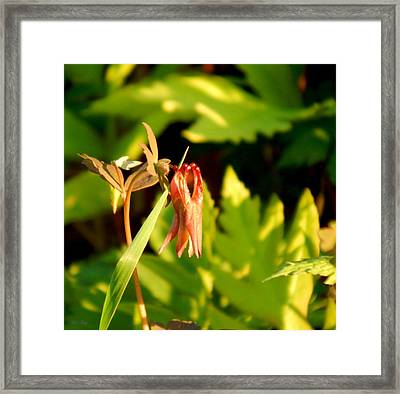 Honeysuckle Framed Print by Wild Thing