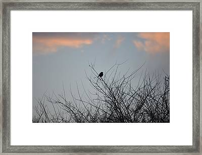 Hope Perched  Atop Framed Print by Sonali Gangane
