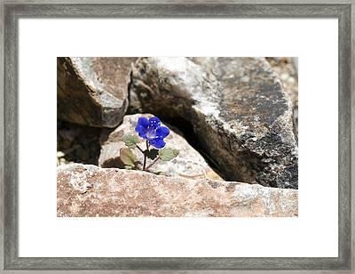 Hope Framed Print by Susan Degginger